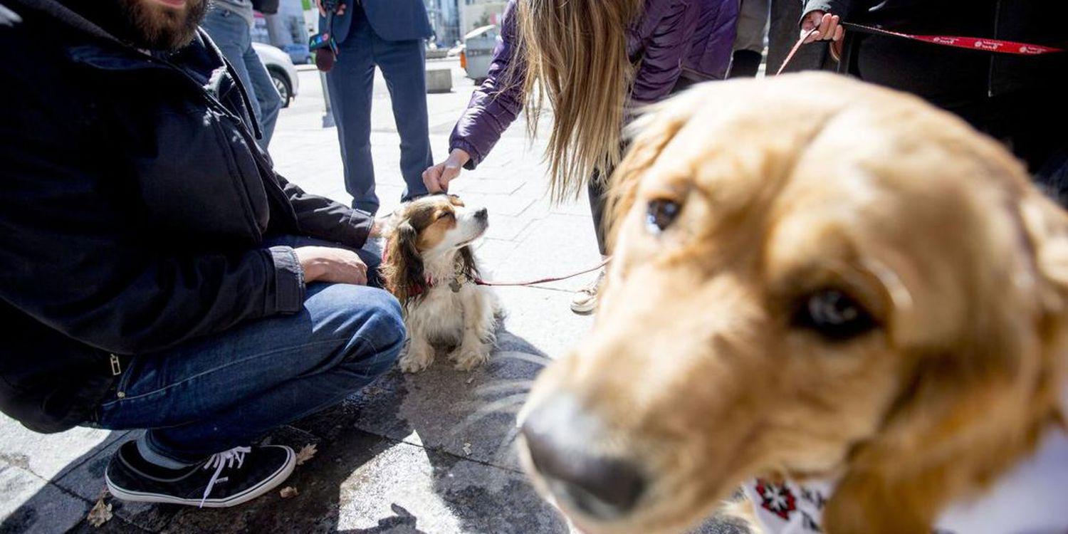 St John Ambulance Canada Therapy Dogs offers comfort after horrific van attack